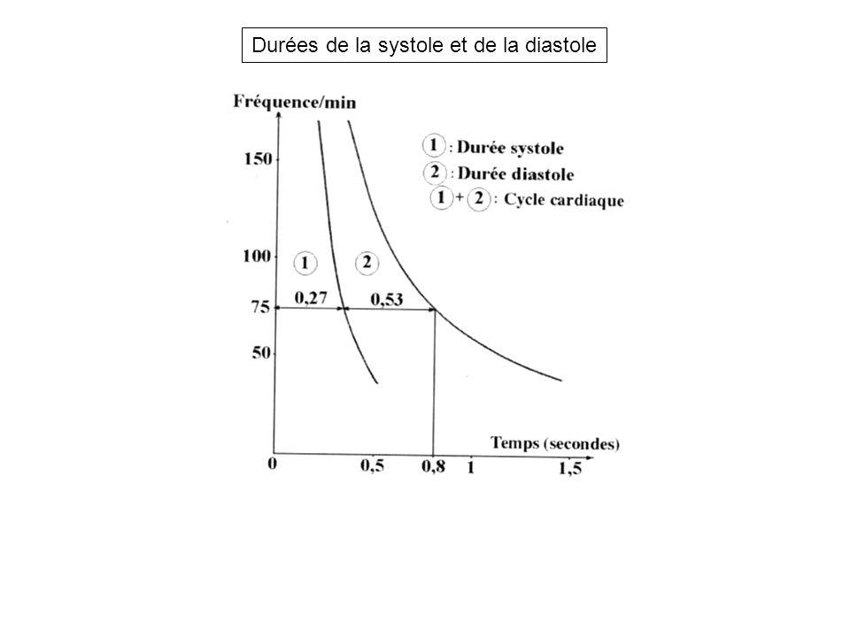 Durées de la systole et de la diastole