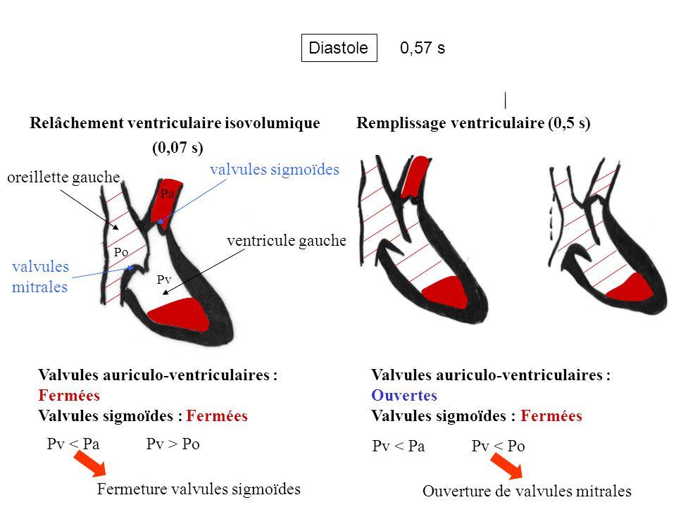 Relâchement ventriculaire isovolumique (0,07 s)