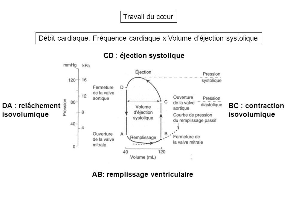 AB: remplissage ventriculaire