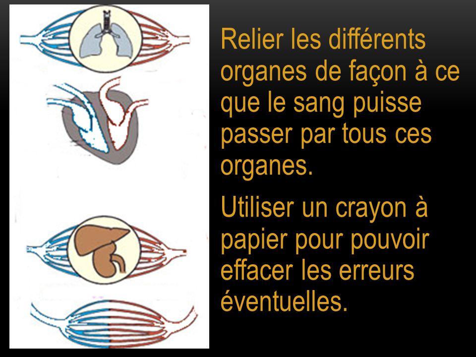 Relier les différents organes de façon à ce que le sang puisse passer par tous ces organes.