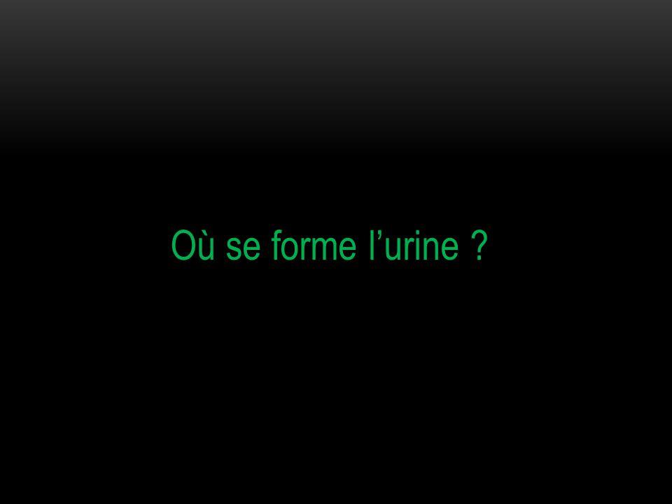 Où se forme l'urine