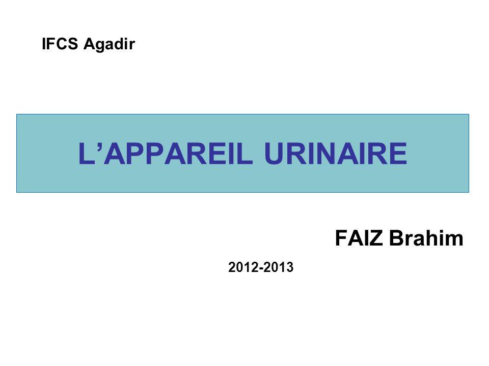 IFCS Agadir L'APPAREIL URINAIRE FAIZ Brahim 2012-2013