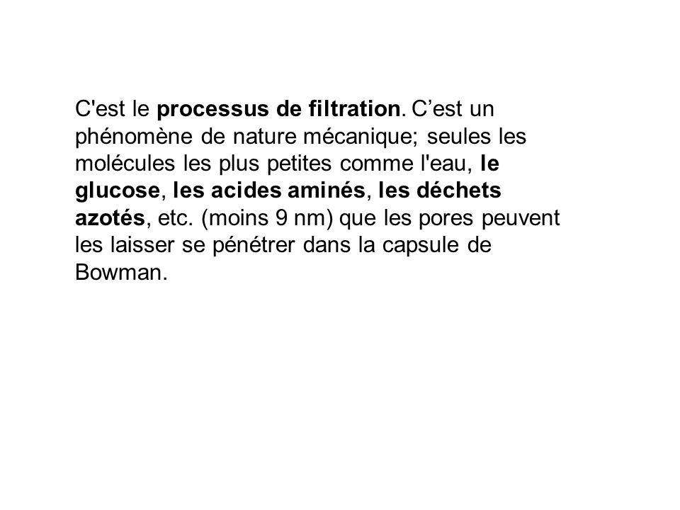 C est le processus de filtration. C'est un