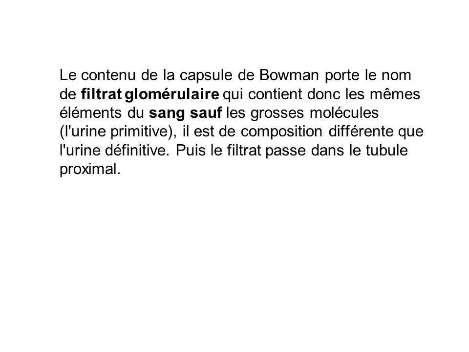 Le contenu de la capsule de Bowman porte le nom