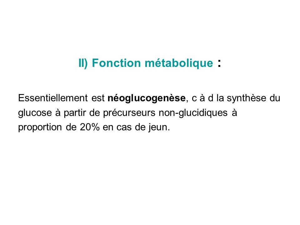 II) Fonction métabolique :