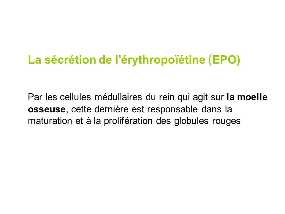 La sécrétion de l érythropoïétine (EPO)