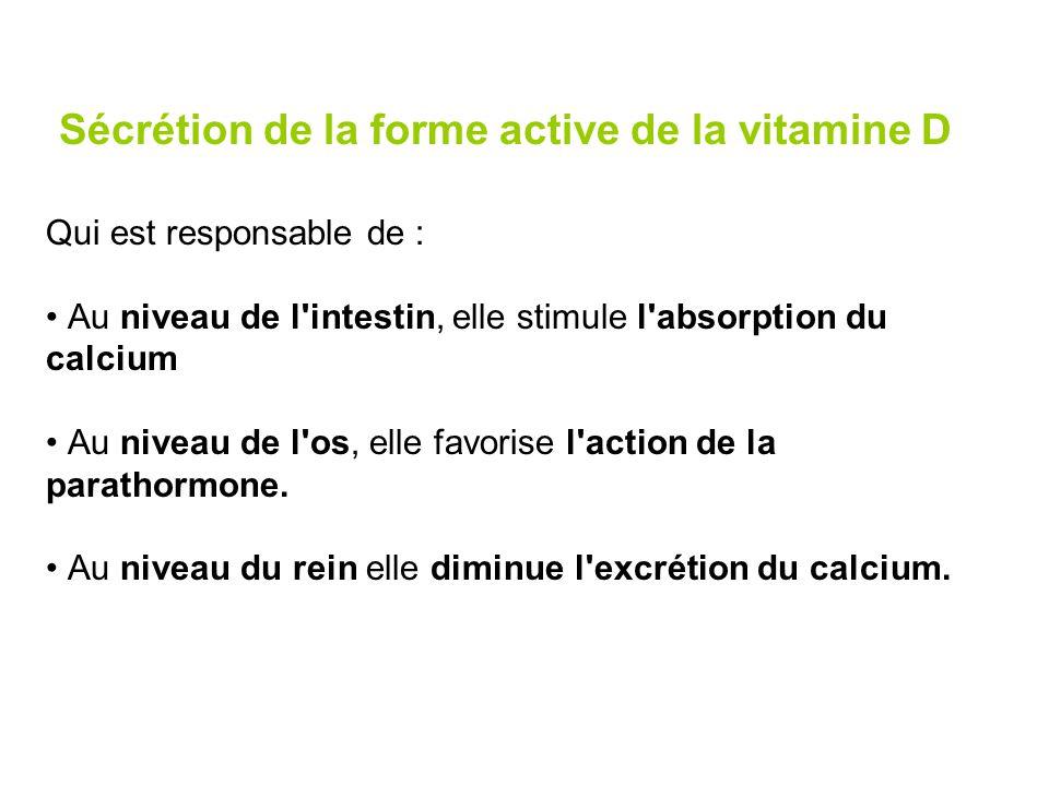 Sécrétion de la forme active de la vitamine D