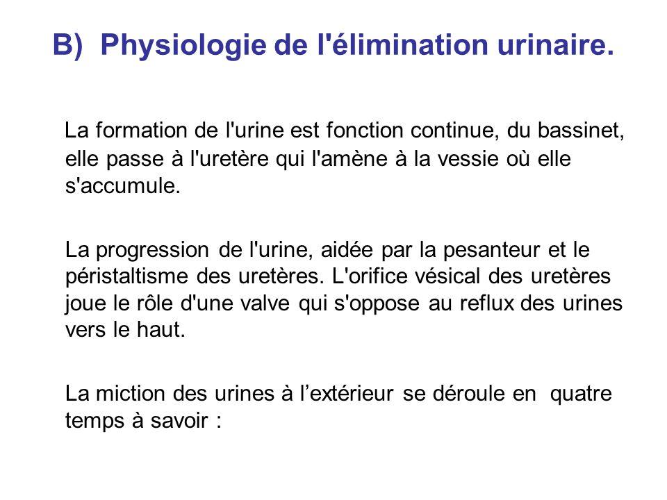 B) Physiologie de l élimination urinaire.