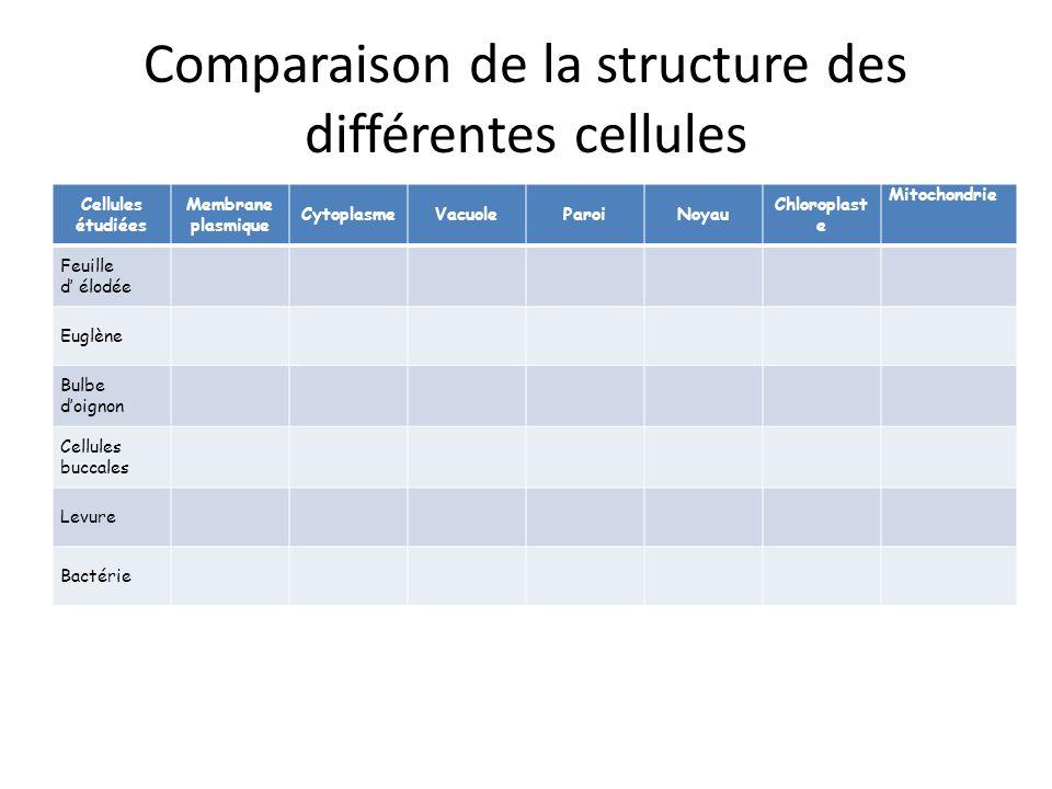Comparaison de la structure des différentes cellules