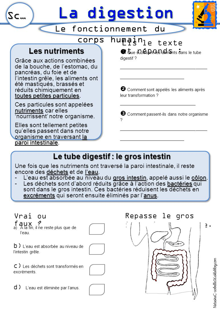 Le tube digestif : le gros intestin