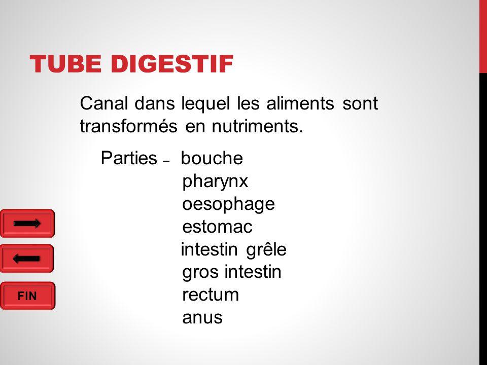 Tube digestif Canal dans lequel les aliments sont transformés en nutriments. Parties – bouche. pharynx.