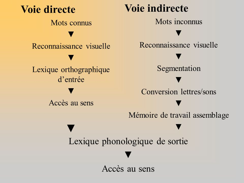 Voie indirecte Voie directe Lexique phonologique de sortie ▼