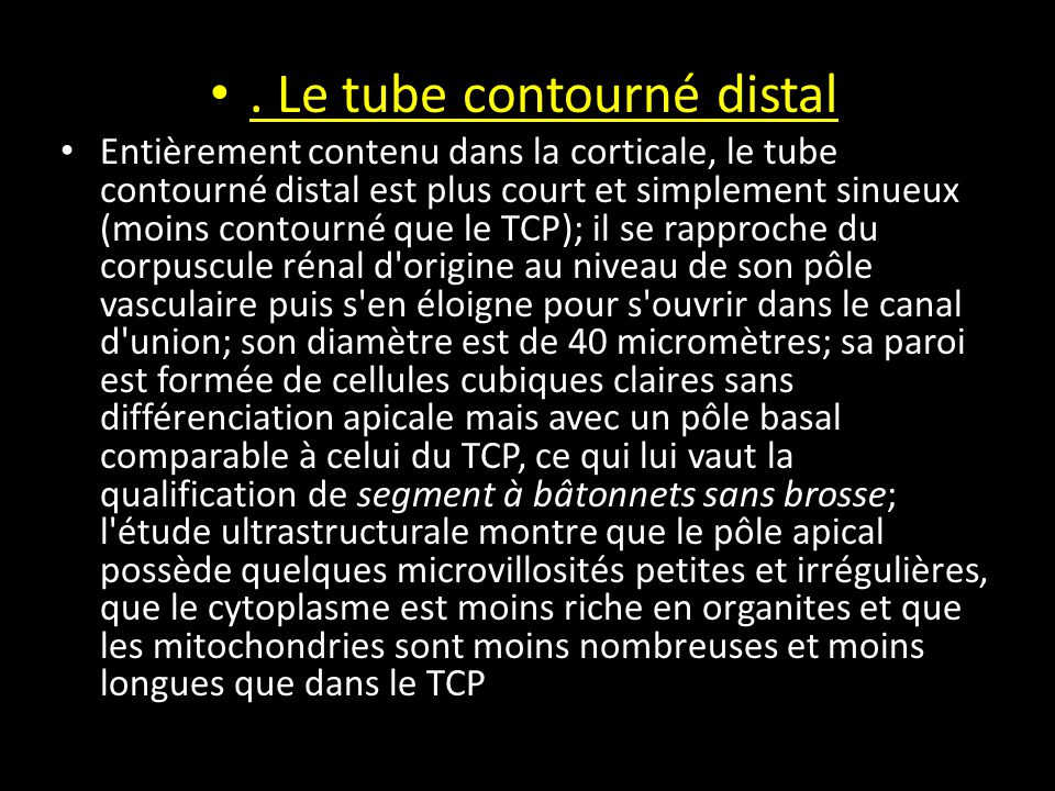 . Le tube contourné distal
