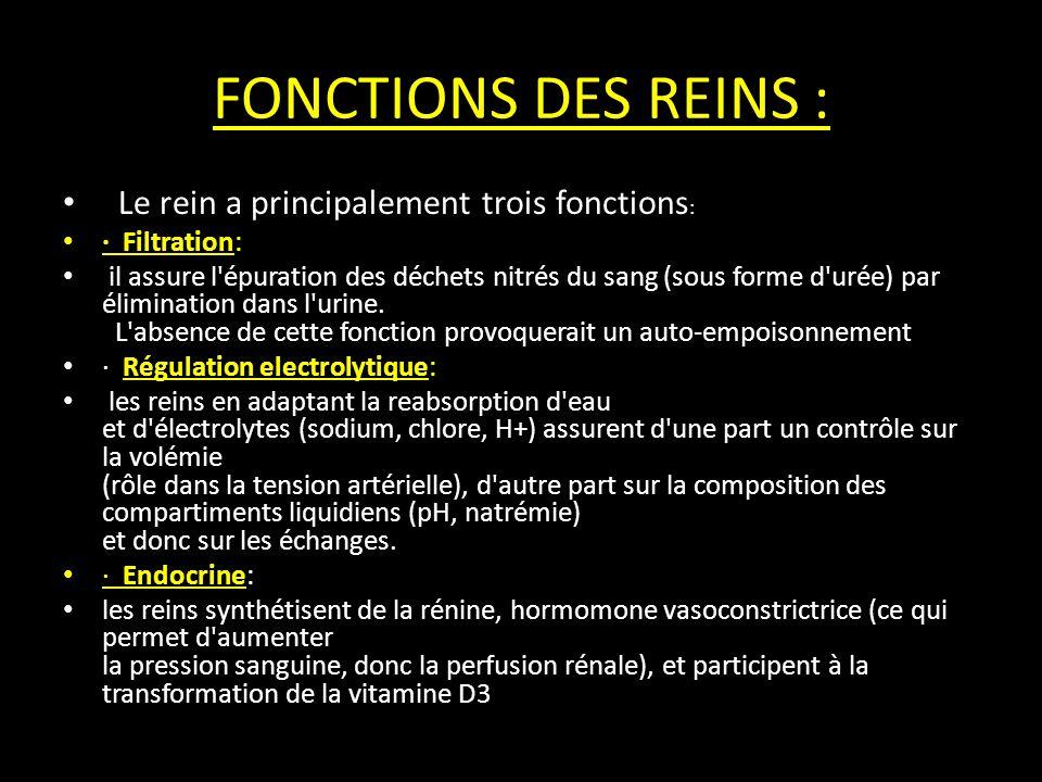 FONCTIONS DES REINS : Le rein a principalement trois fonctions: