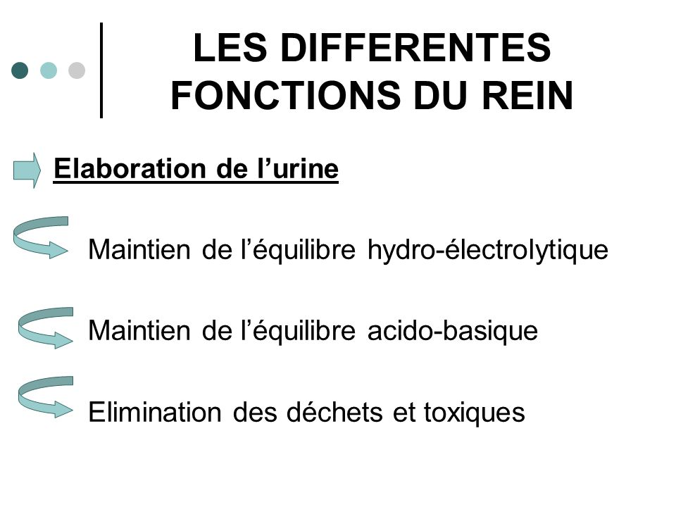 LES DIFFERENTES FONCTIONS DU REIN