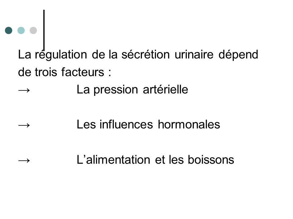 La régulation de la sécrétion urinaire dépend