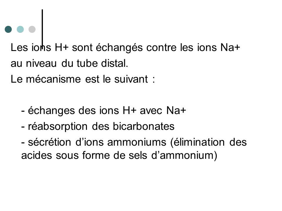 Les ions H+ sont échangés contre les ions Na+
