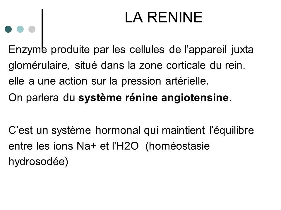 LA RENINE Enzyme produite par les cellules de l'appareil juxta