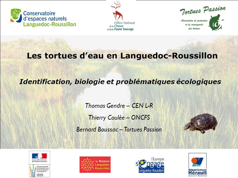 Les tortues d'eau en Languedoc-Roussillon