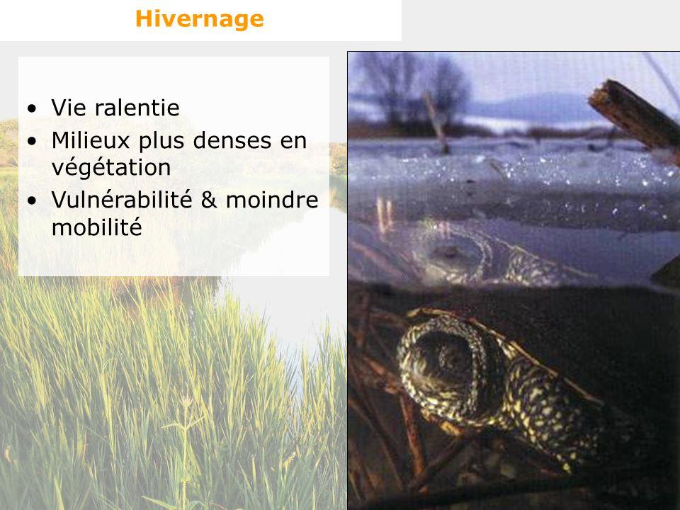 Hivernage Vie ralentie Milieux plus denses en végétation Vulnérabilité & moindre mobilité