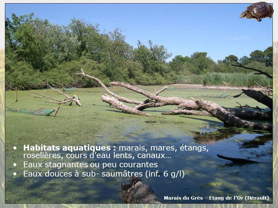 Marais du Grès – Etang de l'Or (Hérault)