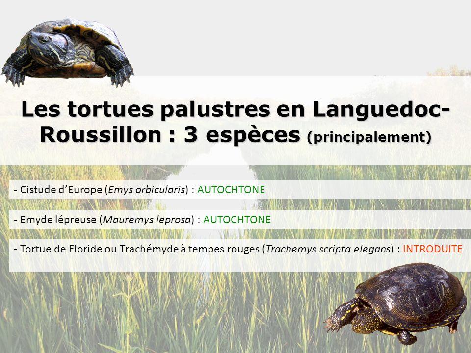 Les tortues palustres en Languedoc-Roussillon : 3 espèces (principalement)