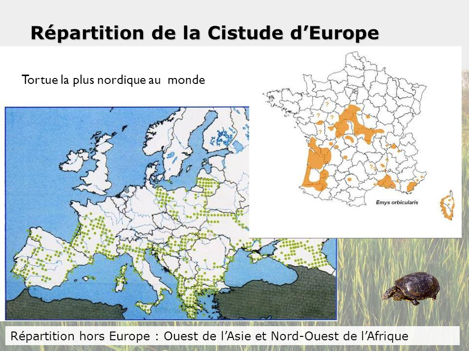 Répartition de la Cistude d'Europe