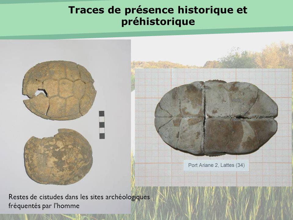 Traces de présence historique et préhistorique