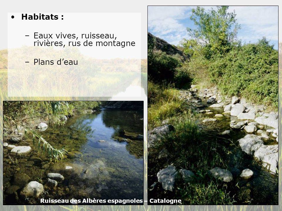 Eaux vives, ruisseau, rivières, rus de montagne