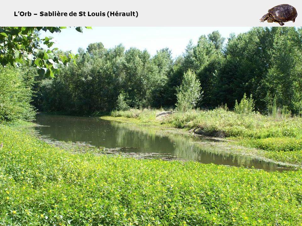 L'Orb – Sablière de St Louis (Hérault)