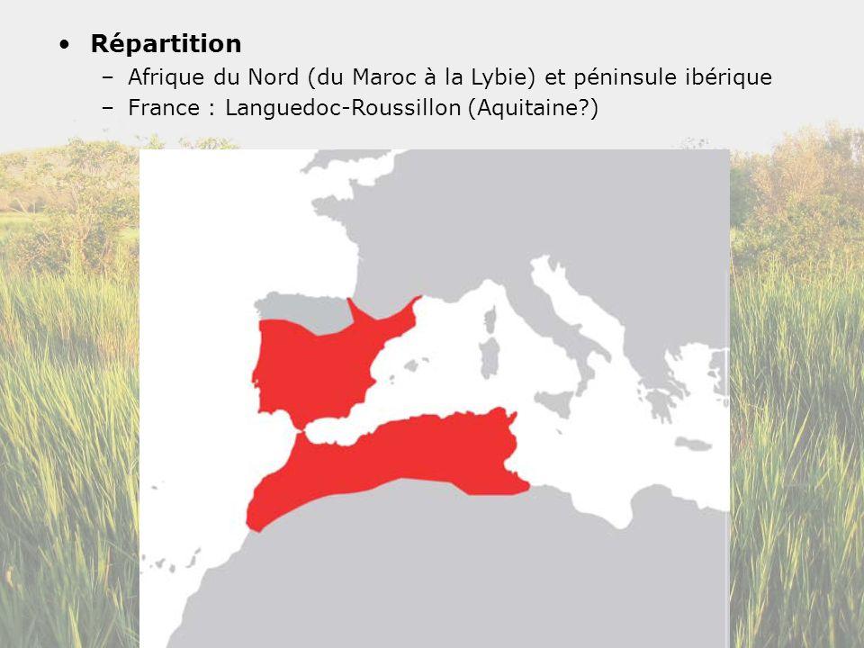 Répartition Afrique du Nord (du Maroc à la Lybie) et péninsule ibérique.