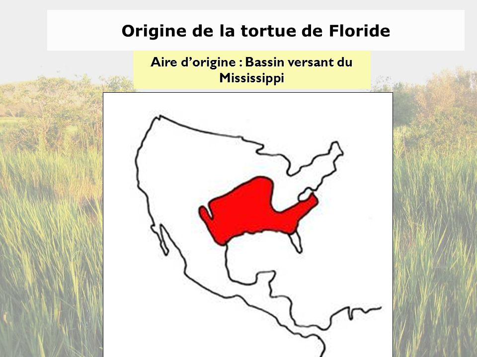 Origine de la tortue de Floride