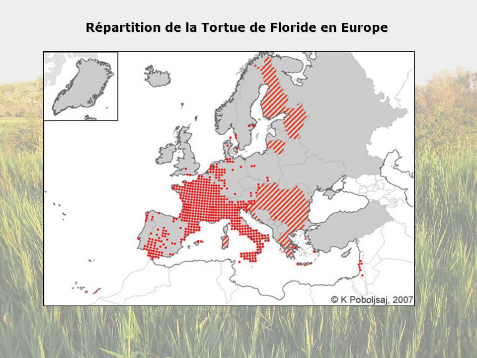 Répartition de la Tortue de Floride en Europe