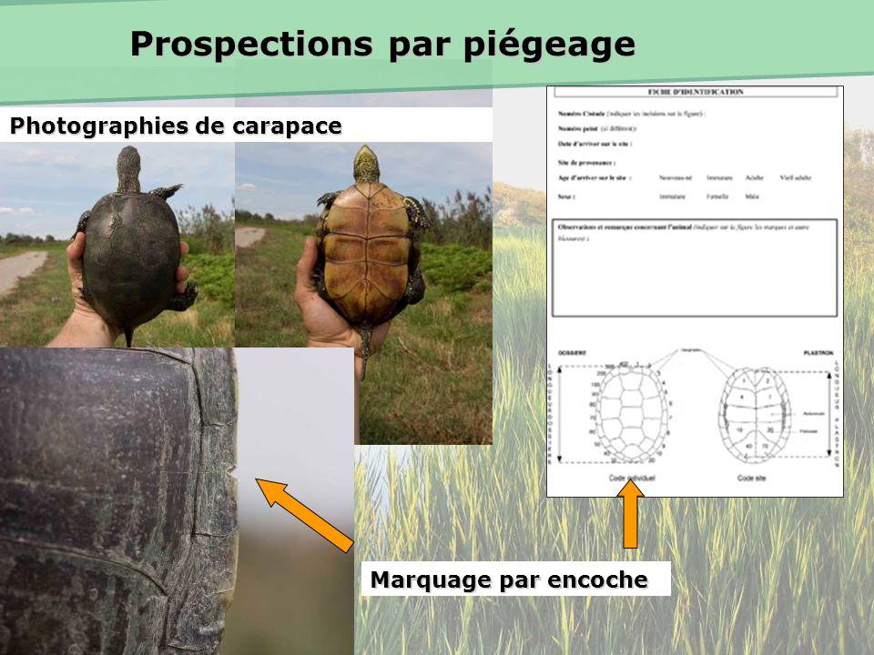 Prospections par piégeage