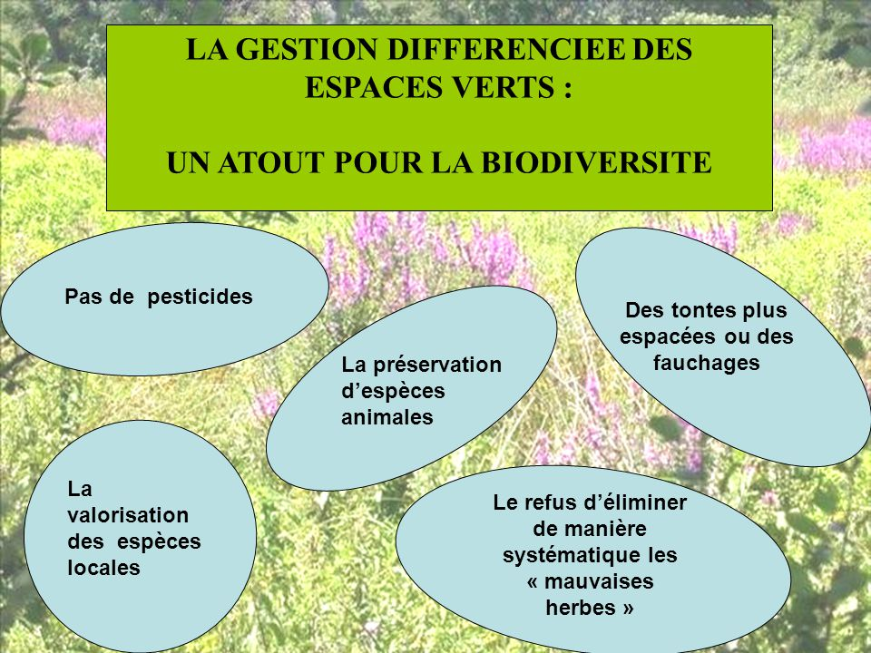 Le lycee de brive voutezac la gestion differenciee ppt for Importance des espaces verts