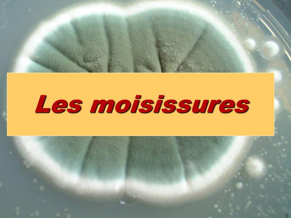 Les moisissures micromycètes