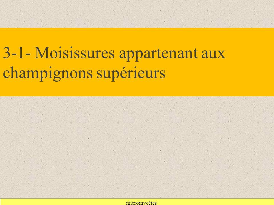 3-1- Moisissures appartenant aux champignons supérieurs