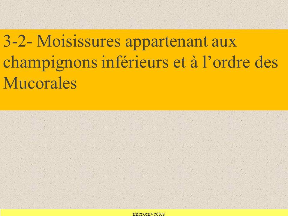 3-2- Moisissures appartenant aux champignons inférieurs et à l'ordre des Mucorales