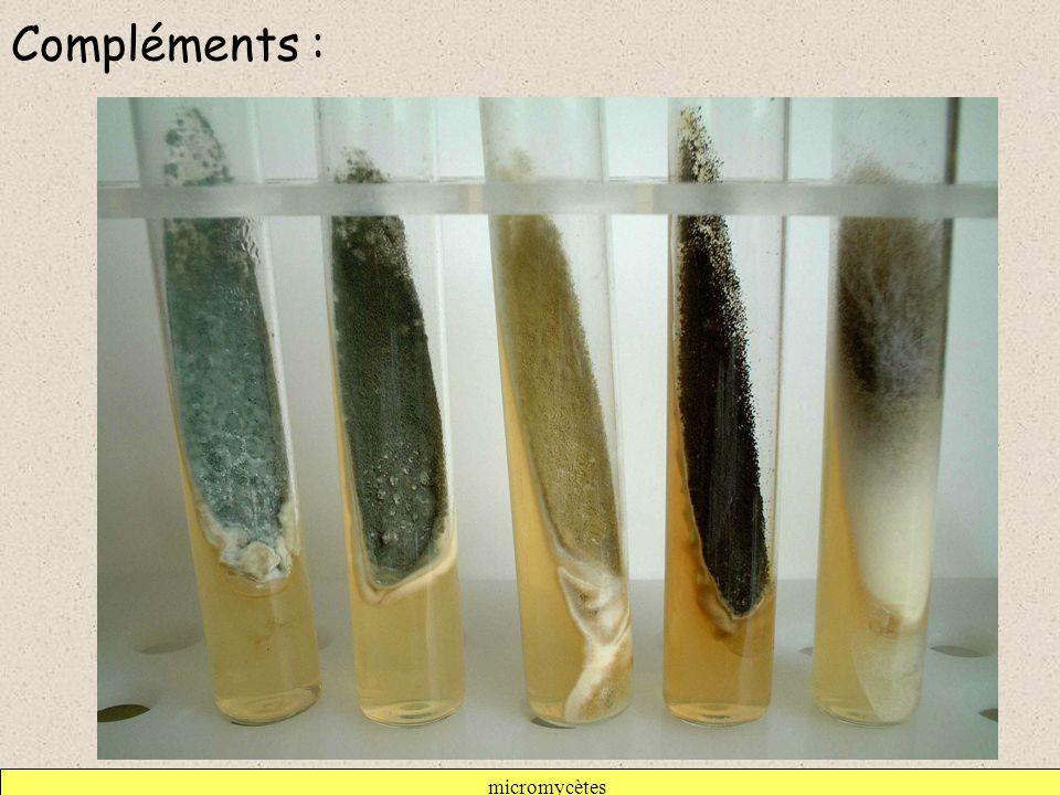 Compléments : micromycètes