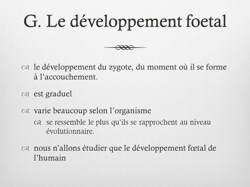 G. Le développement foetal