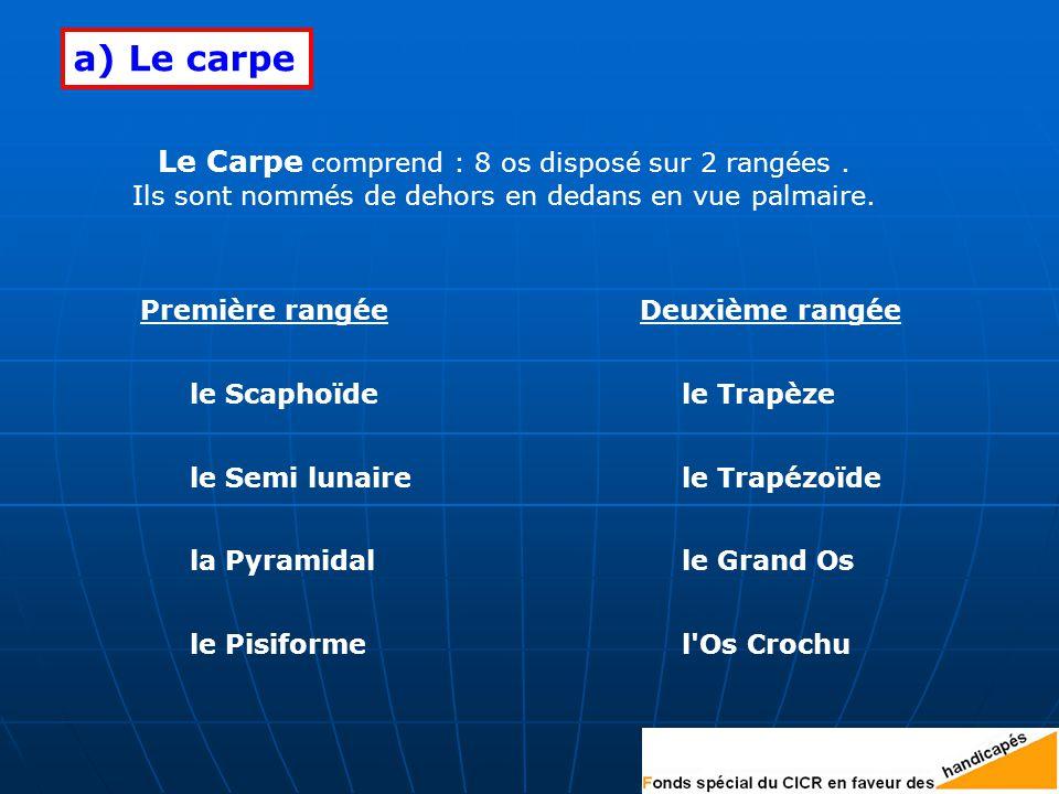 a) Le carpe Le Carpe comprend : 8 os disposé sur 2 rangées .