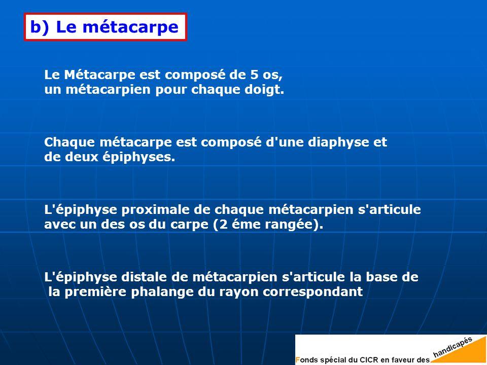 b) Le métacarpe Le Métacarpe est composé de 5 os,