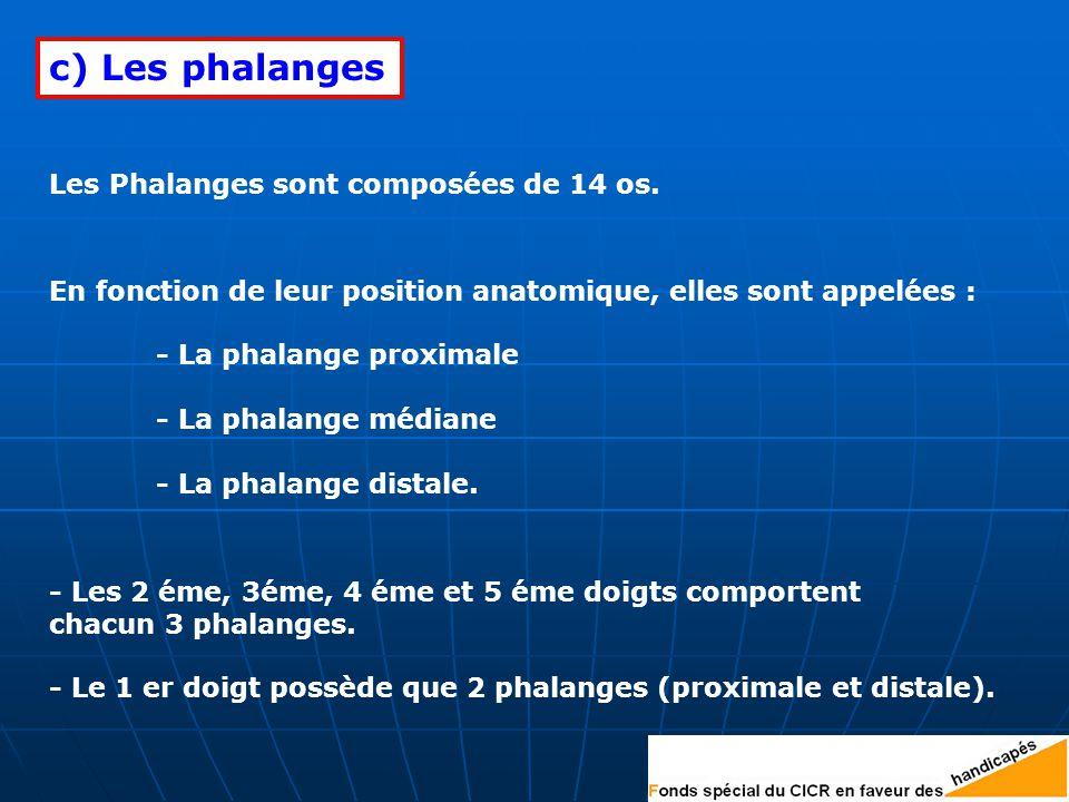 c) Les phalanges Les Phalanges sont composées de 14 os.