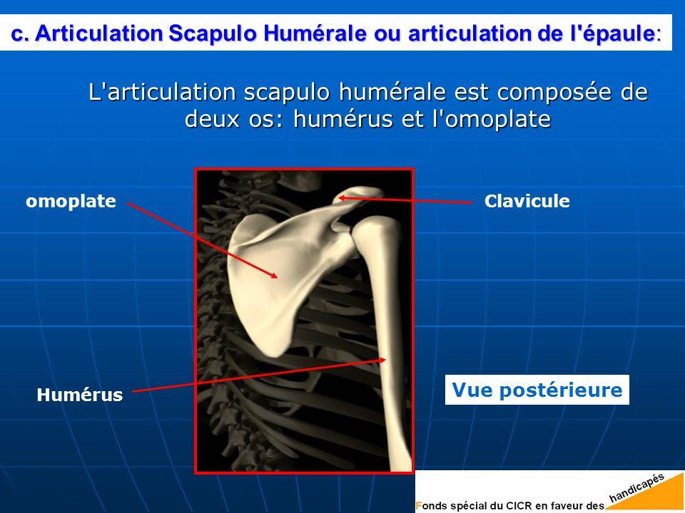 c. Articulation Scapulo Humérale ou articulation de l épaule: