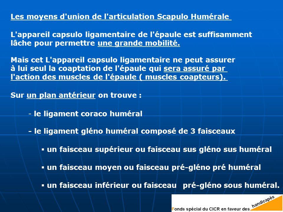 Les moyens d union de l articulation Scapulo Humérale