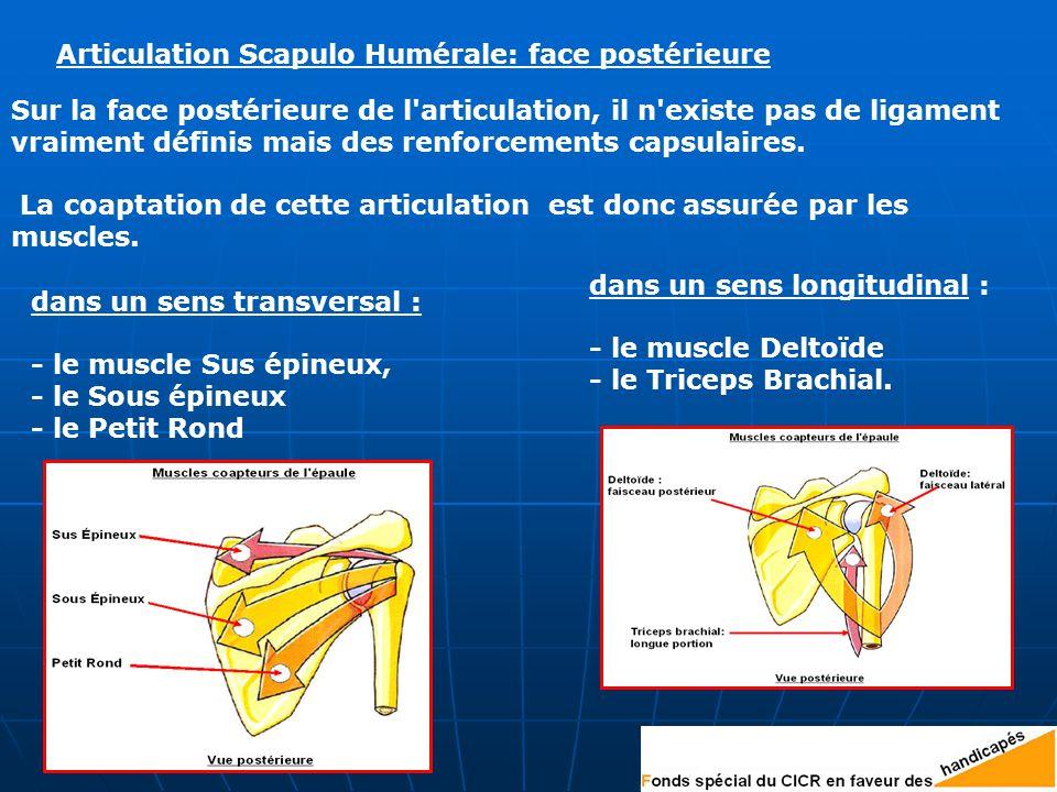 Articulation Scapulo Humérale: face postérieure
