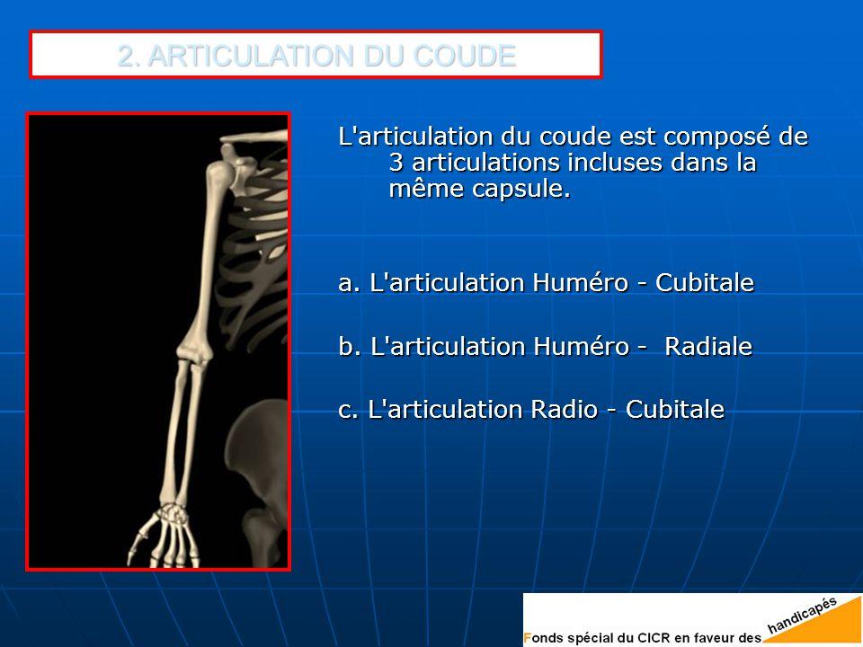 2. ARTICULATION DU COUDE L articulation du coude est composé de 3 articulations incluses dans la même capsule.