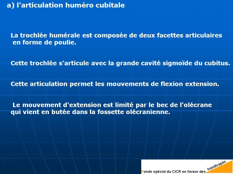 a) l articulation huméro cubitale