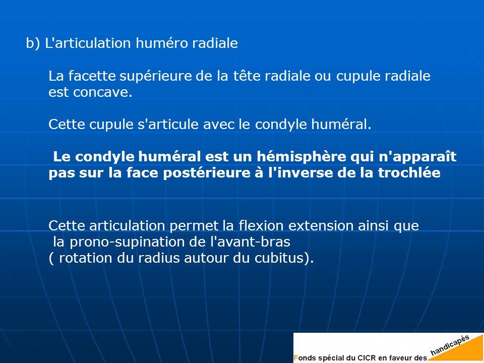 b) L articulation huméro radiale