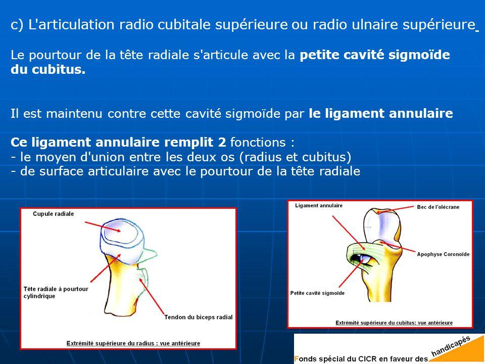 c) L articulation radio cubitale supérieure ou radio ulnaire supérieure
